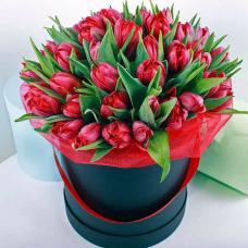 51 пионовидный тюльпан в коробке