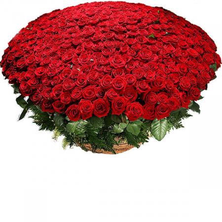 """Композиция из 501 розы Гран При """"Любовь всегда права!"""""""