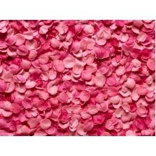 Лепестки роз Море мечты