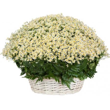 Цветы в корзине На ромашковом поле