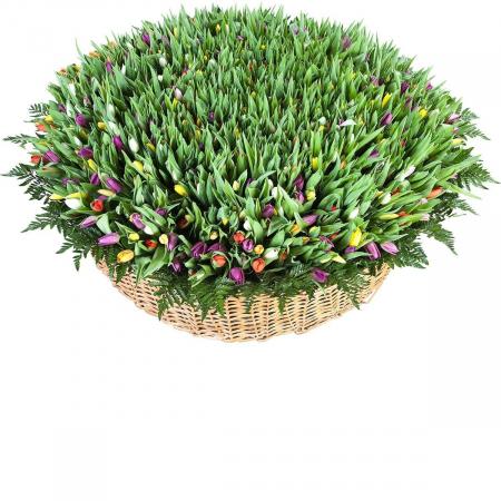 Корзина из 1001 тюльпана