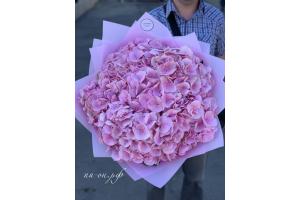 9 розовых гортензий